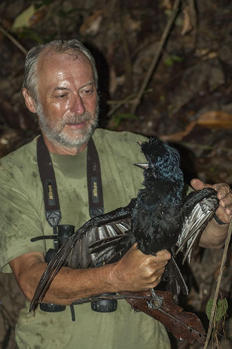 <p>Vzacný model vranucha (<em>Cephalopterus ornatus</em>). Rio Orinoco, Kolumbie (foto Radana Dungelová).</p>