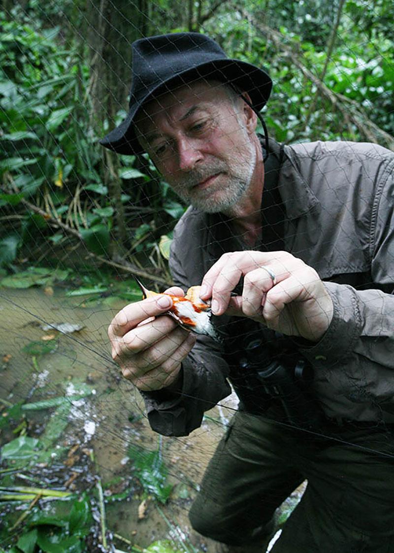 <p>Drobné ptáky chytám do sítě a po rychlém skicování je pouštím. Yasuni (Rio Curaray), Ekvádor (foto Štěpán Rusňák).</p>