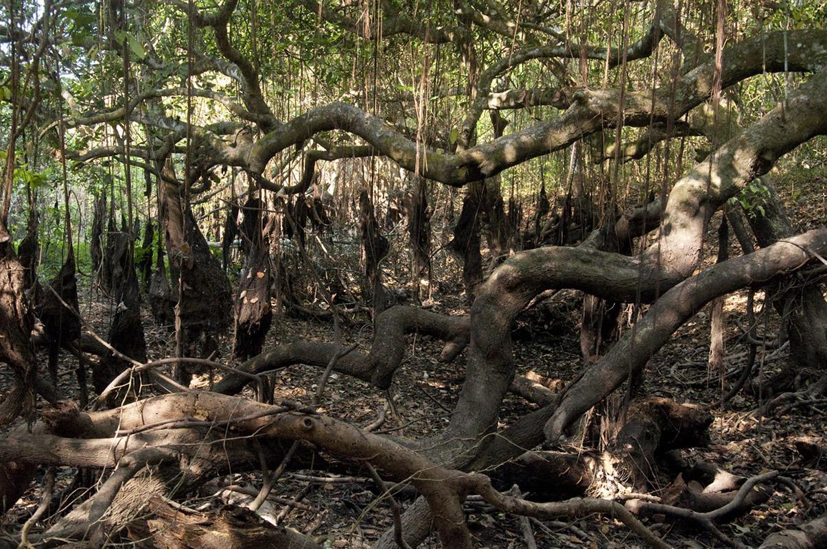 <p>Fazenda Sao Bento, Pantanal, Brazil.</p>