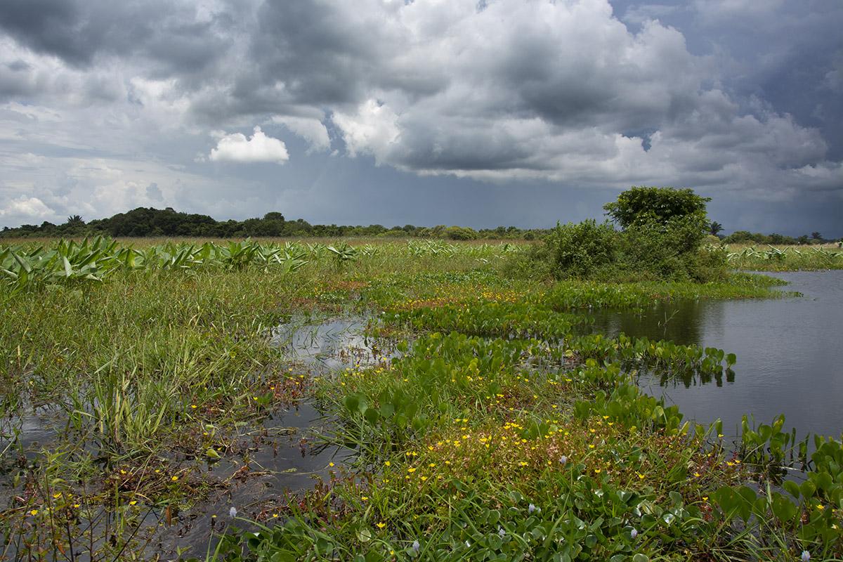 <p>Hato La Aurora. Llanos, Colombia.</p>