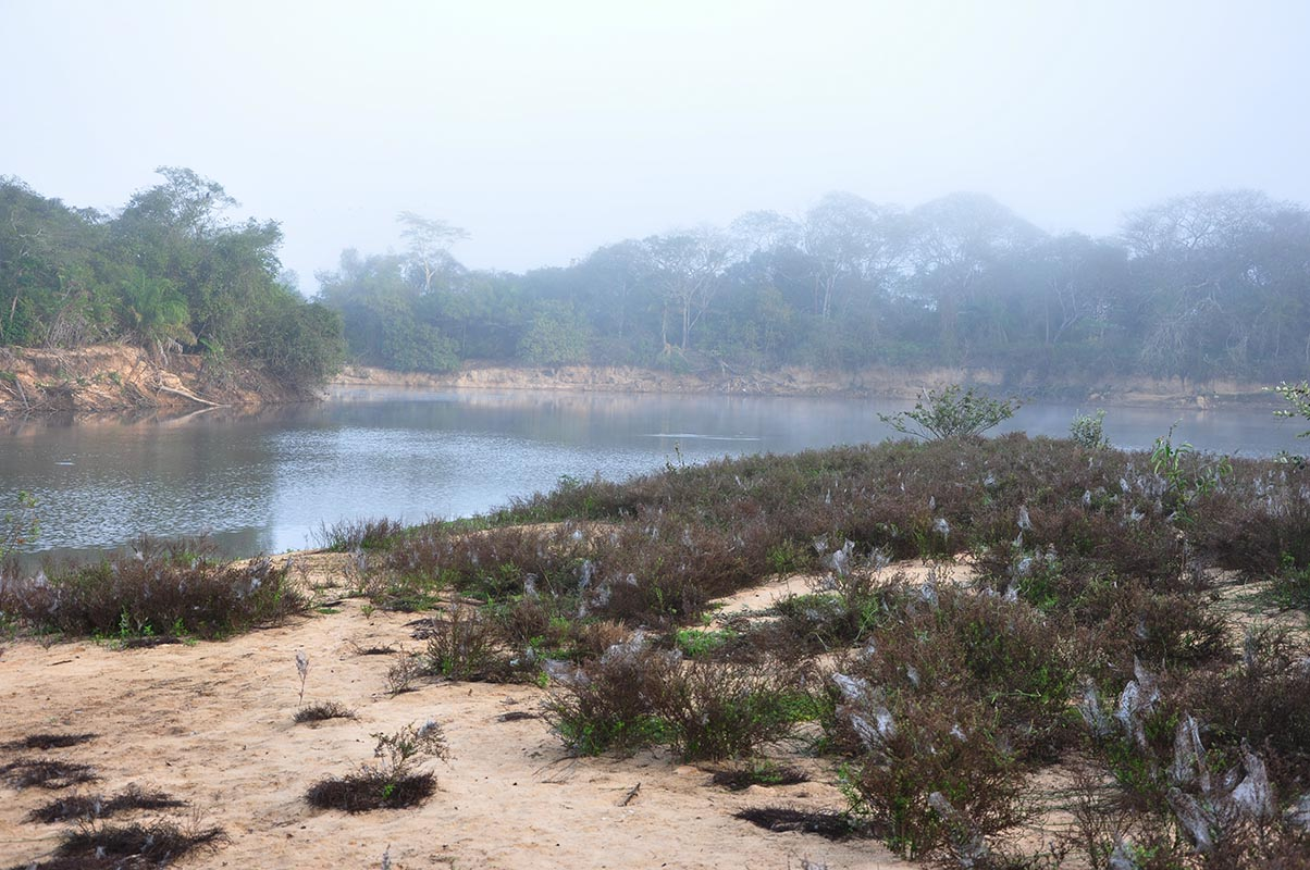 <p>Fazenda Barranco Alto, Pantanal, Brazil.</p>