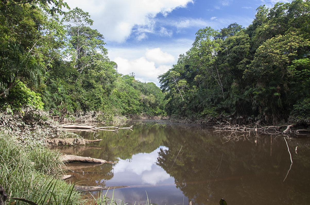 <p>Rio Tiputini (Yasuni, Amazonia), Ecuador.</p>