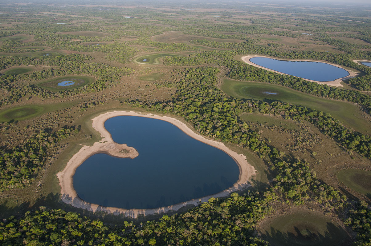 <p>Brazilian Pantanal is extraordinarily rich for wildlife. Local ecosystem of savannas and wetlands is very similar to that in Los Llanos. Fazenda Barranco Alto, Pantanal, Brazil.</p>