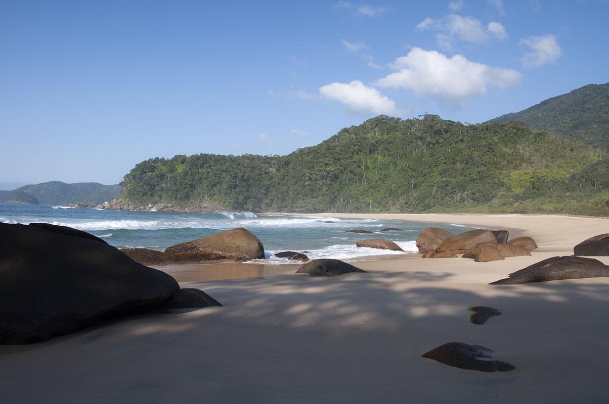 <p>Mata Atlantica (Trinidade), Brazil.</p>