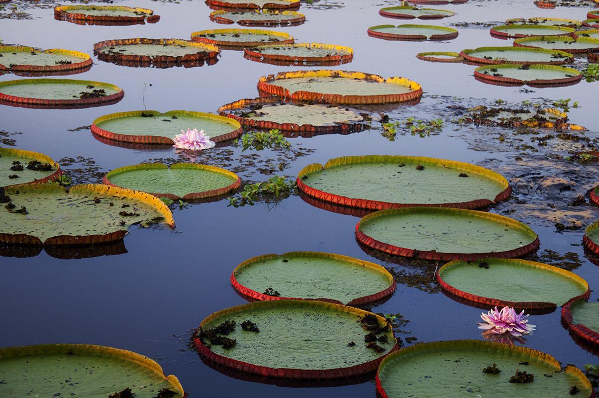 <p>Porto Jofre, Pantanal, Brazil.</p>