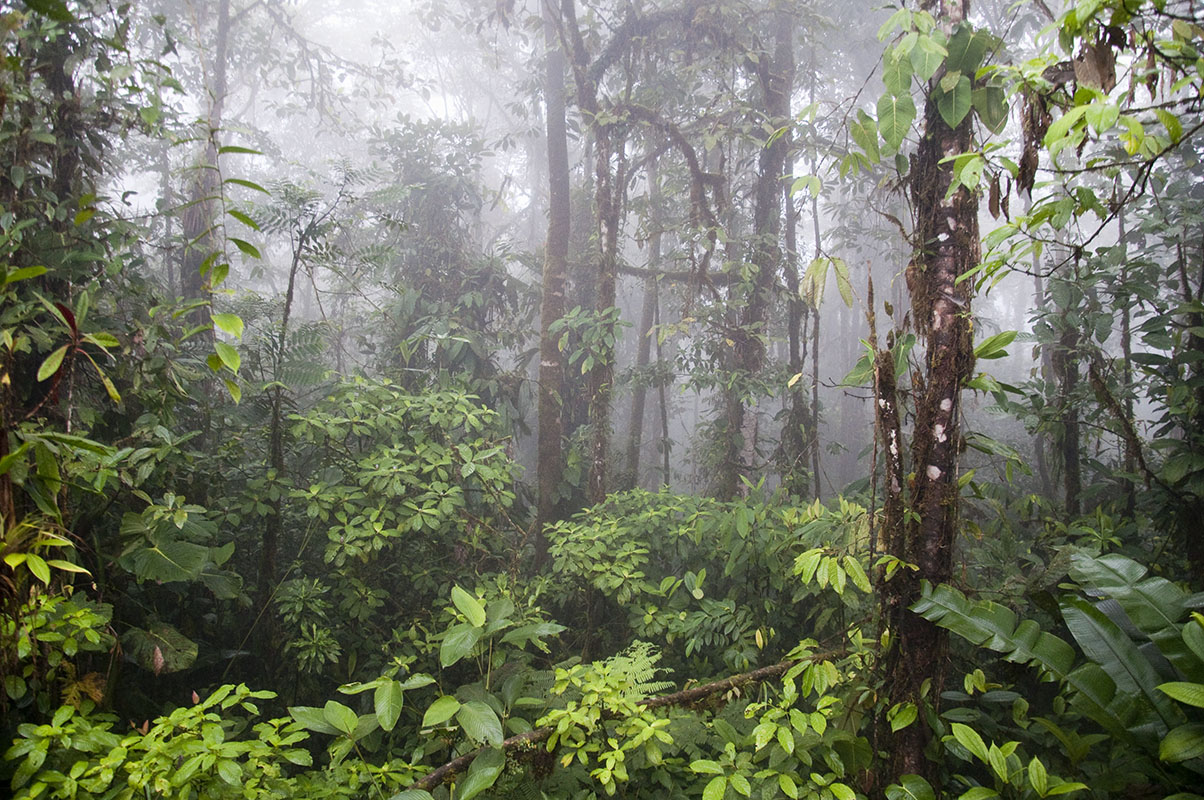 <p>Giovanni Onore founded also Otongachi reserve in Chocó. Andes, Ecuador.</p>