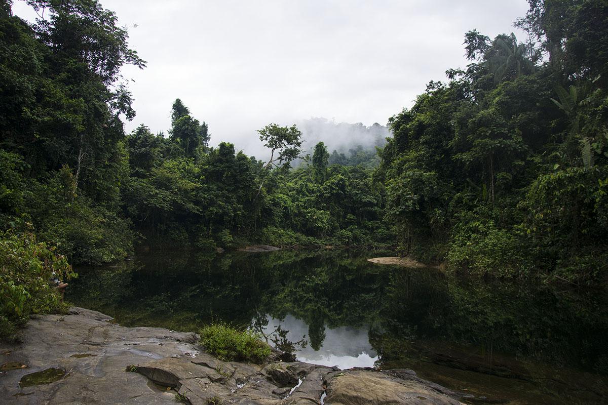 <p>Rio Yuri (Maigualida, Amazonia), Venezuela.</p>