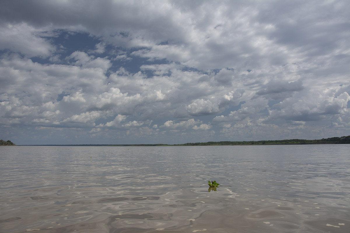 <p>Amazonas is the backbone of Amazonia. But for painting wildlife I prefer smaller rivers. Amazonas near Leticia, Colombia – Brazil.</p>