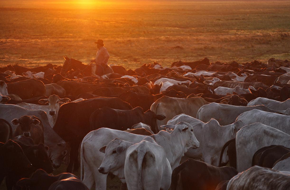 <p>Almost the whole Pantanal is divided among cattle farms. Fazenda Sao Joao, Pantanal, Brazil.</p>