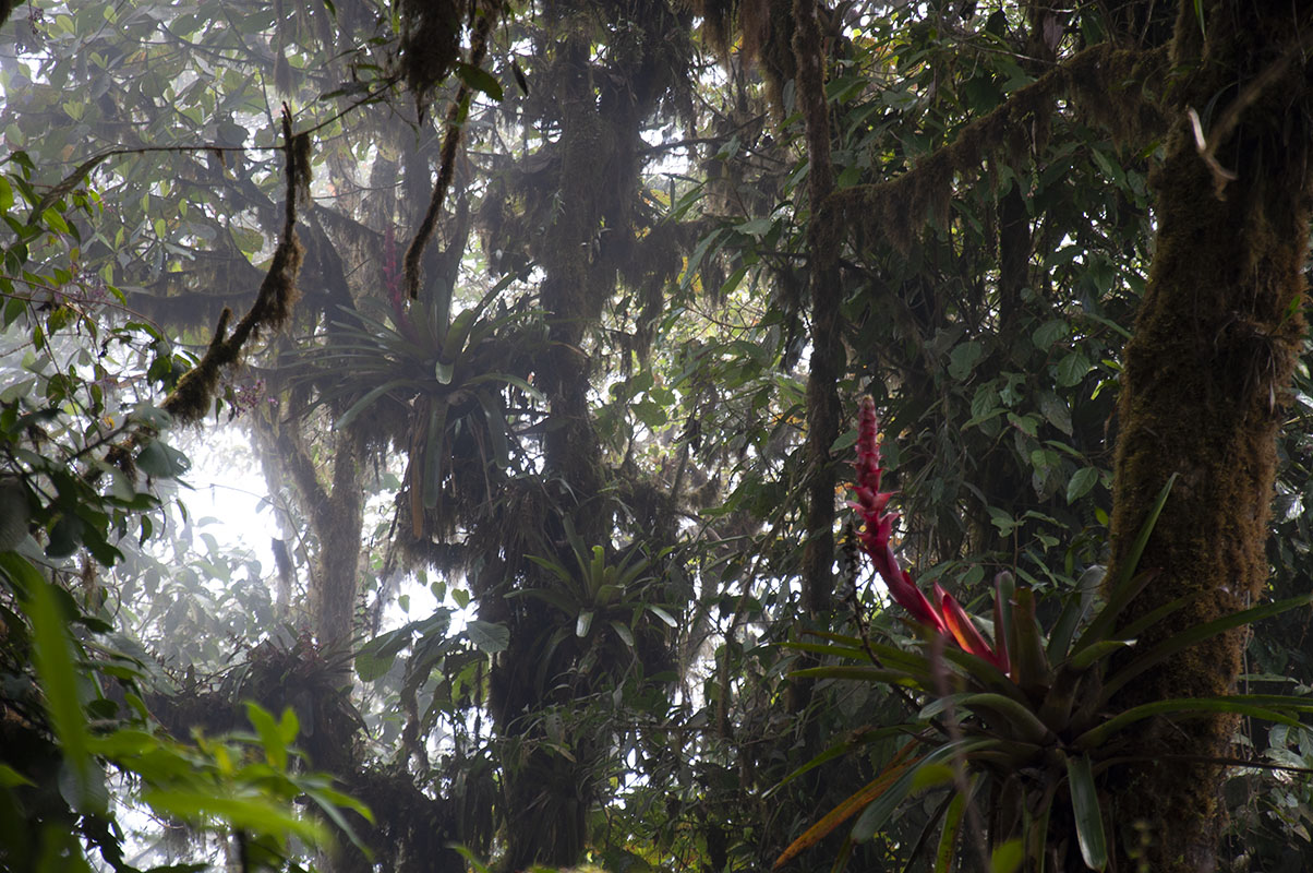 <p>Otonga reserve, Andes, Ecuador.</p>
