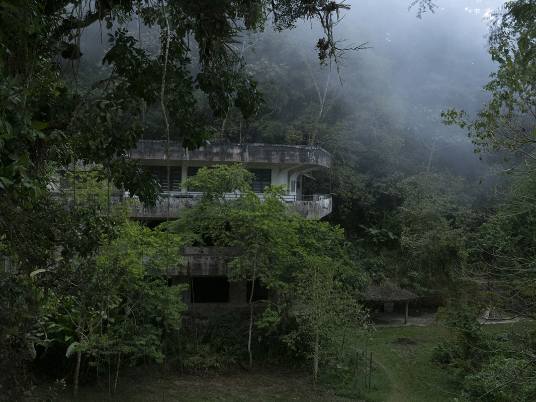 <p>Biological station Rancho Grande is one of my favourite painting places in the montane forest ecosystem. National park Henry Pittier, venezuela.</p>