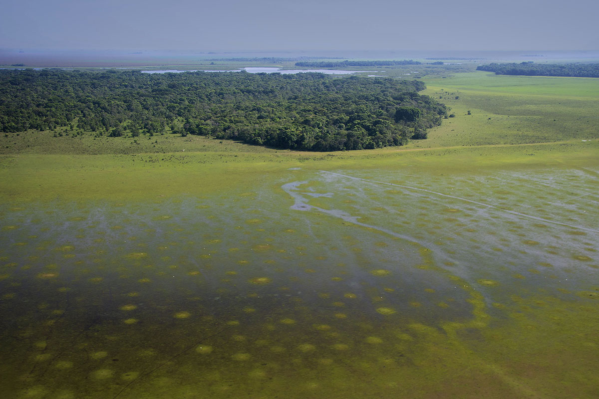 <p>Swampy Llanos de Moxos in the central Bolivia is difficult to access. It is the home to very rare blue-throated macaw (<em>Ara glaucogullaris</em>). </p>