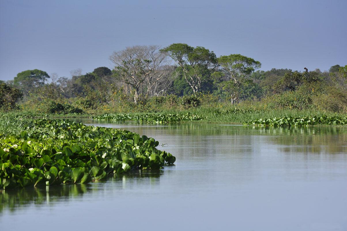 <p>Fazenda Sao Joao, Pantanal, Brazil.</p>