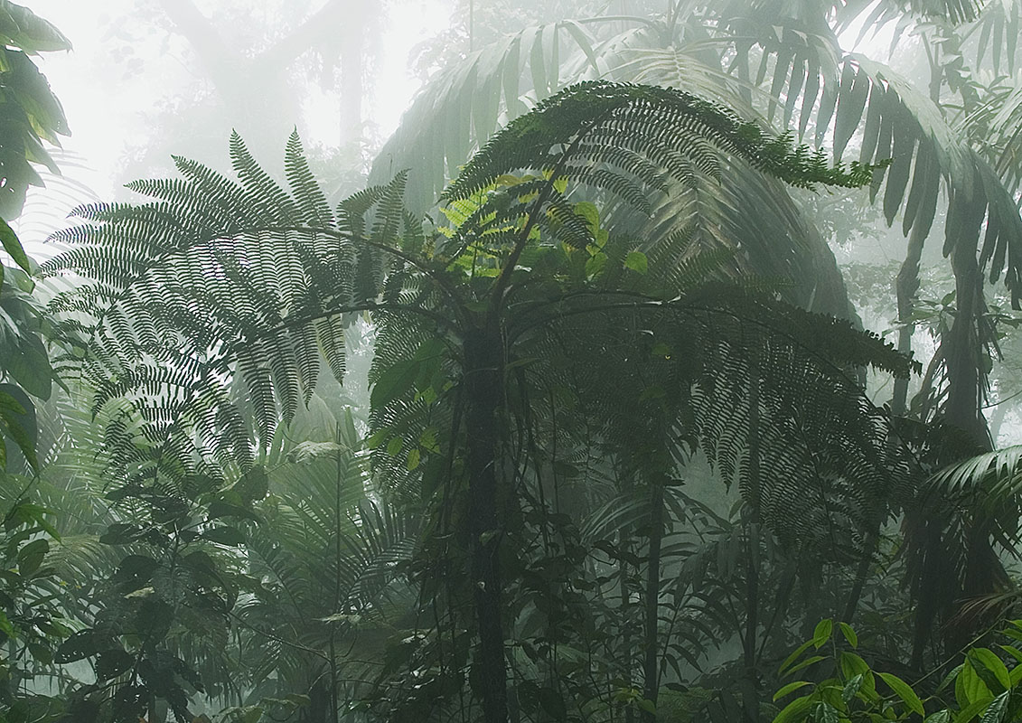<p>Montane forest on the slope of Guacamaya peak (photo Radana Dungelová).</p>