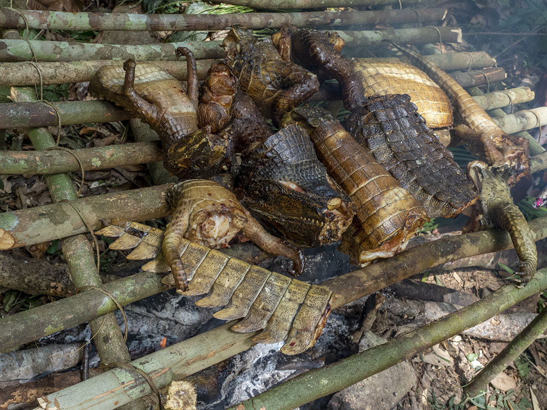 <p>Grill with meat chunks of caimans.</p>